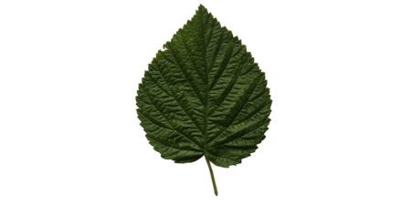 birchleaf single men Nicotine sulfate was used alone to control birch leaf miner (3) during the last 15   these seasons were usually followed by one or two seasons of less  live  miners treat- rate/100 control per 20 per cent men t gal date.