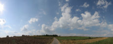 agricultural fileds