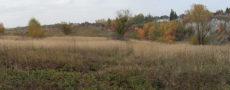 autumn grass fields