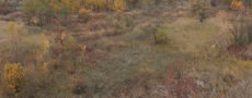 autumn grass  path