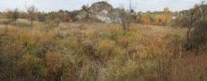 grass limestone rock