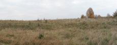 landscape grass fields